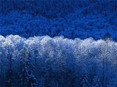 winter_jpg-magnum.jpg