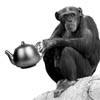 Monkey See, Monkey Pick