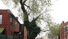 Nuisance Tree Stumps City