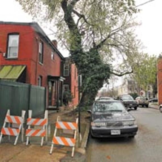 street13_tree_200.jpg