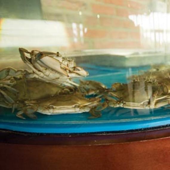food21_crabs_300_0.jpg