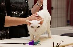 cat-show-header.jpg