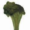 broccoli_bone100.jpg