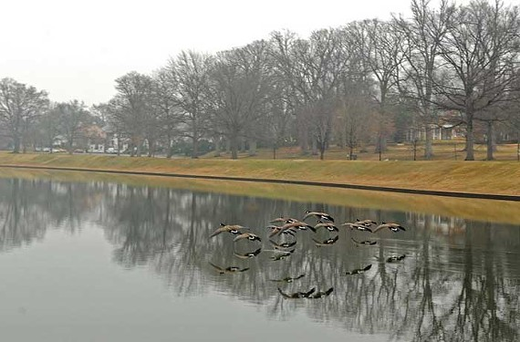 The city is searching for a company to provide at least five small sailboats for rentals and lessons on Swan Lake. - SCOTT ELMQUIST