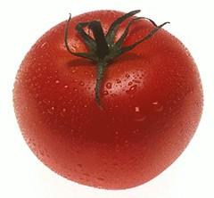tomato_png-magnum.jpg