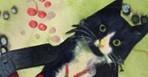 art12.lede.cats.148.jpg