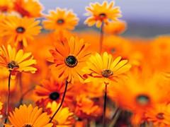 garden_jpg-magnum.jpg