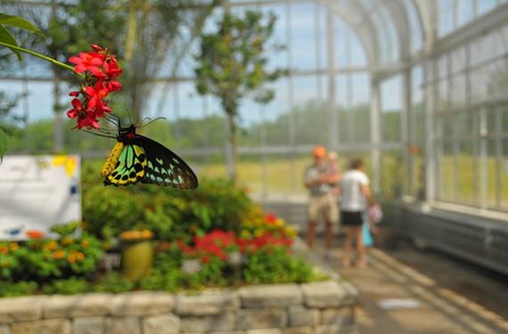 DAY 46: Butterflies Live at Lewis Ginter Botanical Garden.