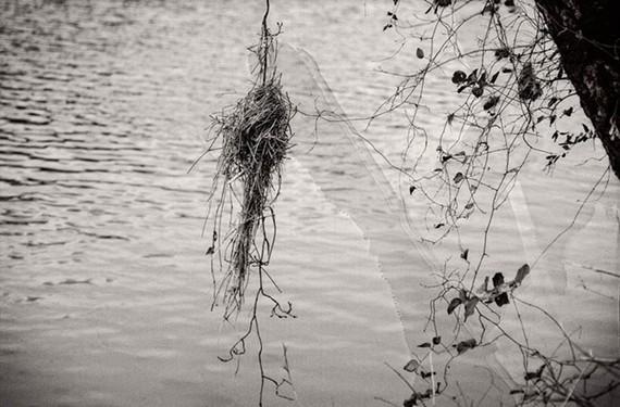 """""""River Nest"""""""