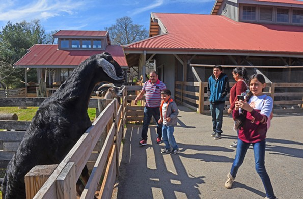 The Children's Farm is a popular attraction for families. The nearby Robins Nature Center also fosters respect for animals and promotes conservation. - SCOTT ELMQUIST
