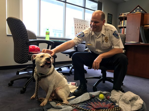 Deputy Chief of Police Steve Drew hangs out with Adele on National Take Your Dog to Work Day Friday. Adele is adoptable from Richmond Animal Care and Control. - JACKIE KRUSZEWSKI
