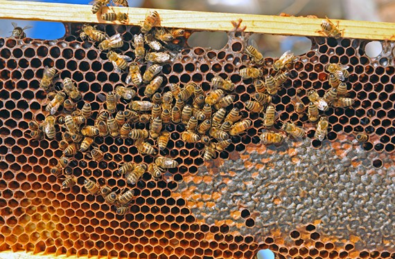 Researchers are trying to figure out why there's a bee shortage, and plant customers are wondering how they can help. Hives like this one at Bearer Farms in Oilville contribute to the local economy.