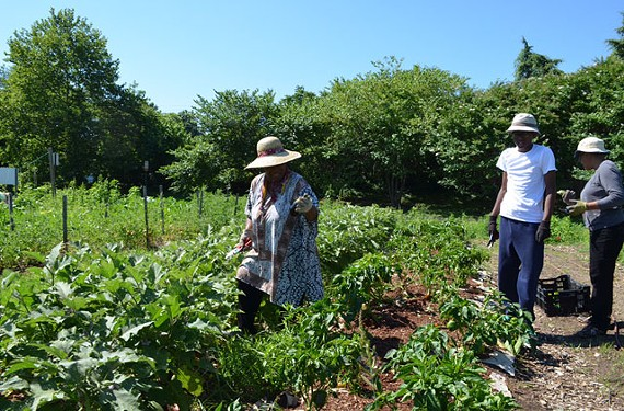 Volunteers Annie Anderson, her daughter Stephanie Ruffin and grandson Nick work the produce at Lewis Ginter Botanical Garden.