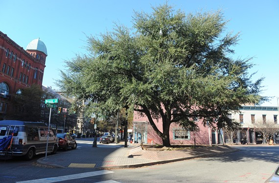 In Jackson Ward, questions remain about the fate of a towering Southern live oak, and whether it will be part of the Maggie Walker memorial.