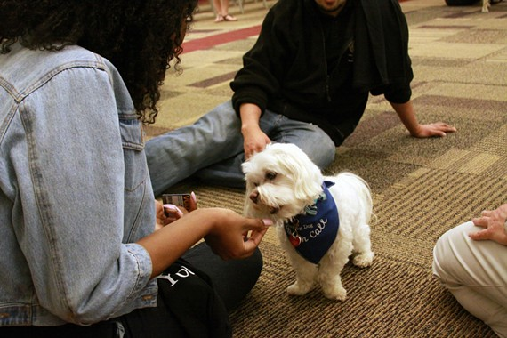 Stewie makes friends with VCU students during a study on the impact of therapy dogs on exam stress.