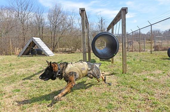 Dog Training Schools In Richmond Va