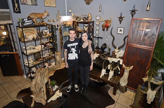 Justin Torone and Alaina Gearhart's gift shop in the Fan is based on their taxidermy pursuits.