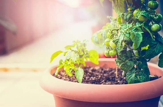 art10_gardening.jpg