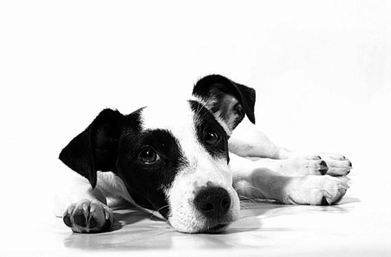 food18_puppy.jpg
