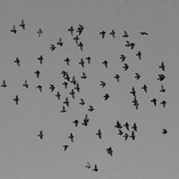 Photos of the Year Birds circling Manchester on a winter evening.