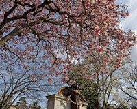 Behind the Photo: Oregon Hill Magnolia
