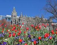 Behind the photo: Tulips and Old City Hall