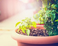 How Young Gardeners Can Find Room to Bloom in a Small Space