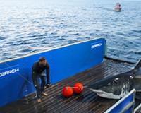 Massive 3,400-Pound Great White Shark Passes Mouth of Chesapeake Bay