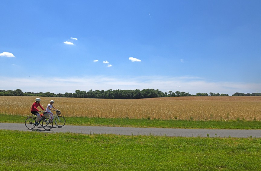 Cyclists ride bicycles with baskets rented from Upper Shirley Vineyards along a scenic stretch of the Virginia Capital Trail. The winery offers 14-mile bike excursions that include lunch and a wine tasting. - SCOTT ELMQUIST