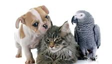 Event Pick: The Richmond Pet Expo