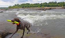 Pets Lovers Beware of James River Algae