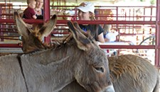 Behind the Photo: Donkeys at the Fair
