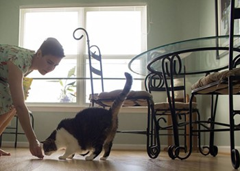 Cat Cafes Coming to Virginia