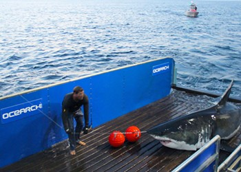 Massive 3,400-Pound Great White Shark Passes Mouth of Chesapeake Bay