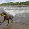 Pets Lovers Beware of James River Algae
