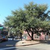 Relocation Explored for Doomed Tree at Maggie Walker Memorial Site