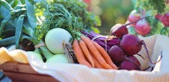 Intro to Nutrition - Uploaded by jlankford