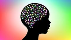 The brain - Uploaded by ScienceMuseumofVirginia