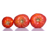 Hanover Tomato Festival at Pole Green Park in Mechanicsville