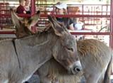 Behind the Photo: Donkeys at the Fair