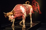 Science on Tap: Animals Unleashed at the Science Museum of Virginia