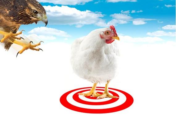 news16_chickens.jpg