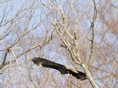 flying_through_trees_400x299.jpg