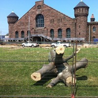 Trees felled on the Common