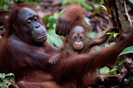 born-to-be-wild-documentary-photo-01-550x365.jpg