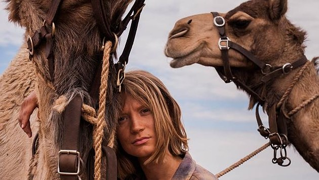 Camels look like such little shits