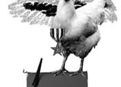 City chicks rawk