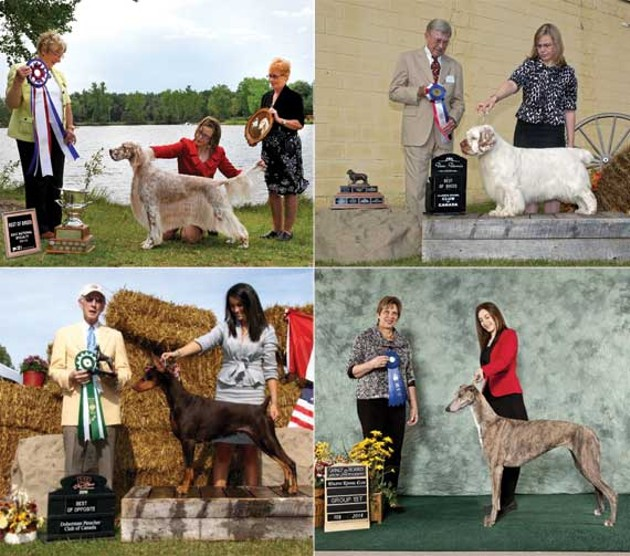 Dartmouth Kennel Club members that have performed well nationally.