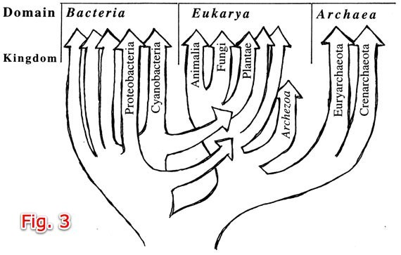 Fig. 3 in the 1990s tree, some branches of bacteria fuse with eukaryotes
