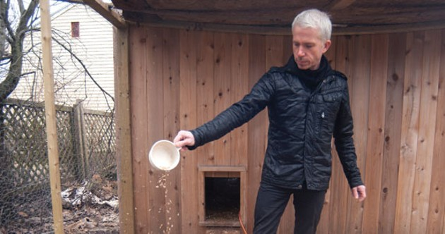 Fred Connors, Halifax's latest candidate for mayor, at his backyard chicken coop. - ANGELA GZOWSKI